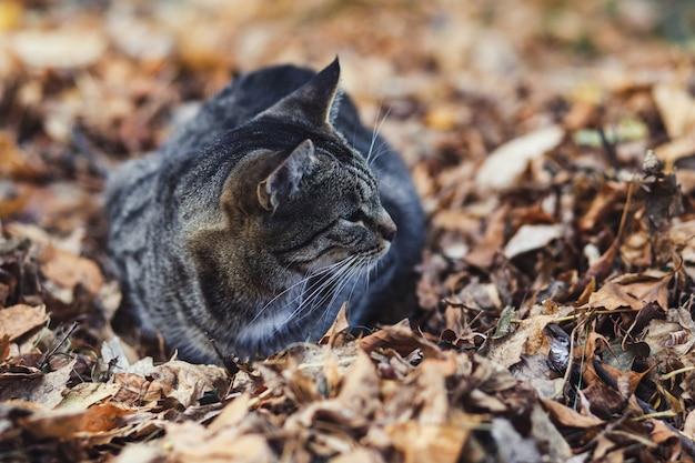 Portret van een straatkat