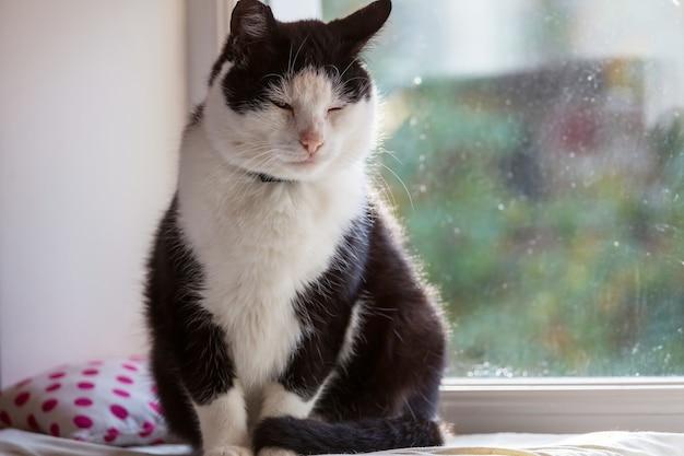 Portret van een volwassen huiskat close-up