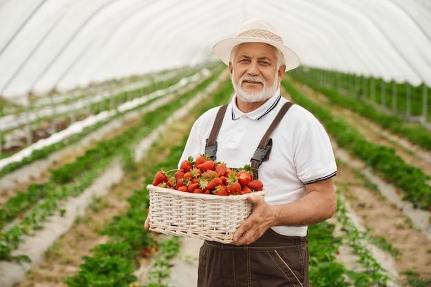 Portret van een volwassen man gekleed in een bruine overall die op een boerderij staat en een mand met rijpe aardbeien vasthoudt. bevoegde boer in witte dop bessen oogsten.