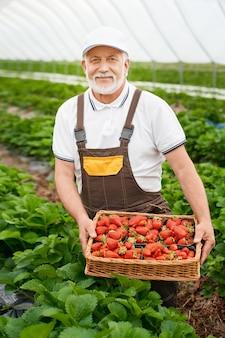 Portret van een volwassen man in uniform met een rieten mand vol zoete verse aardbeien. professionele tuinman die zich bij buitenkas bevindt. oogstconcept.