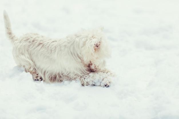Portret van een witte hond in de sneeuw
