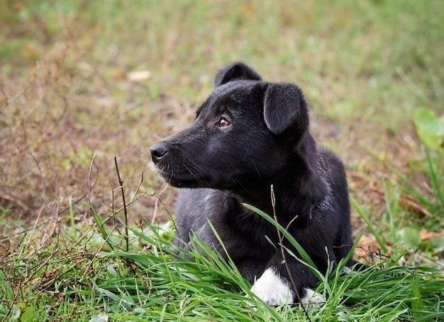 Portret van een zwarte pup