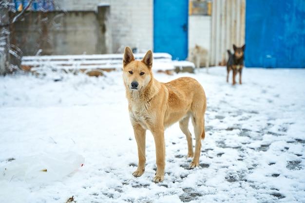 Portret van een zwerfhond op een besneeuwde straat. een zwaar winterseizoen voor zwerfdieren.