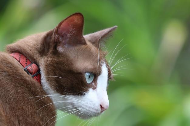 Portret van eenzaamheid van de jonge katten de witte en bruine kat