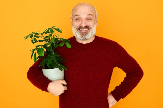 Portret van enkele vrolijke bebaarde gepensioneerde man met stijlvolle gebreide trui met pot met kamerplant onder zijn arm, paraplu-boom kopen voor zijn appartement, energiek gelukkig kijken