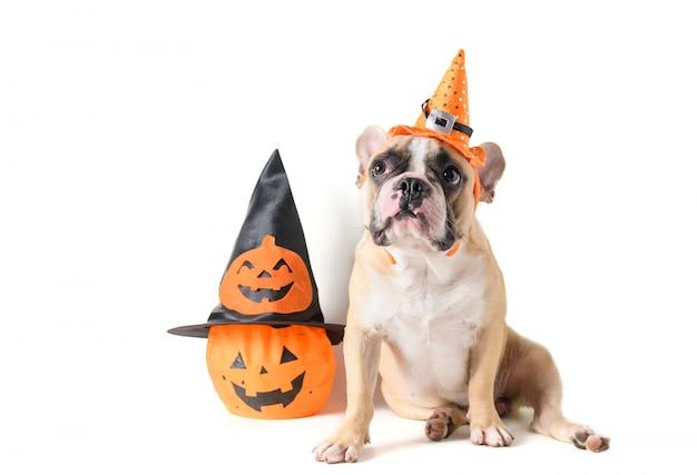 Portret van franse buldog met hoed halloween en glimlach
