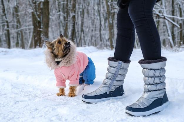 Portret van gekleed schattig hondenras terriër op wandeling in het winterpark in de buurt van de benen van de eigenaar. dieren zorg concept