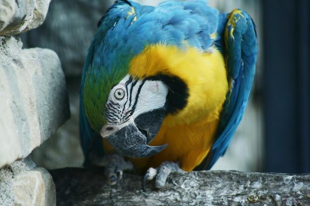 Portret van gekleurde papegaai in een dierentuin