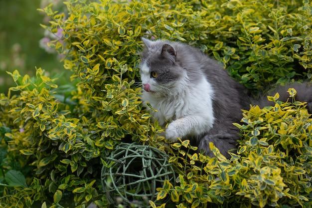 Portret van gelukkige jonge kat in de herfsttuin buitenshuis. vuile kat in de wei. kat ruikt de bloem in een kleurrijke bloeiende tuin.