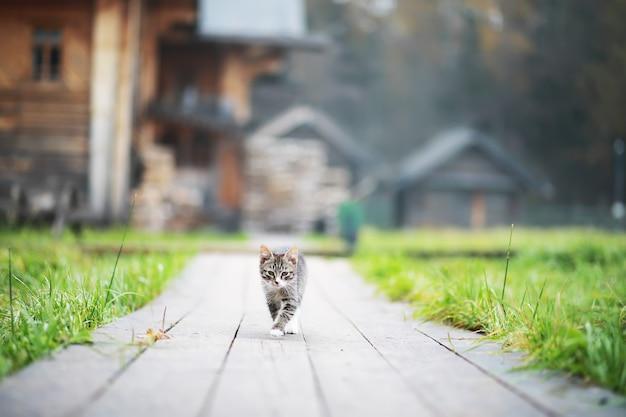Portret van gestreepte kat, close-up schattige kleine grijze kat, portret van rustende kat