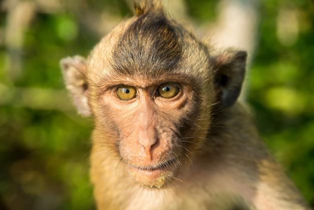 Portret van grappige aap in het wild