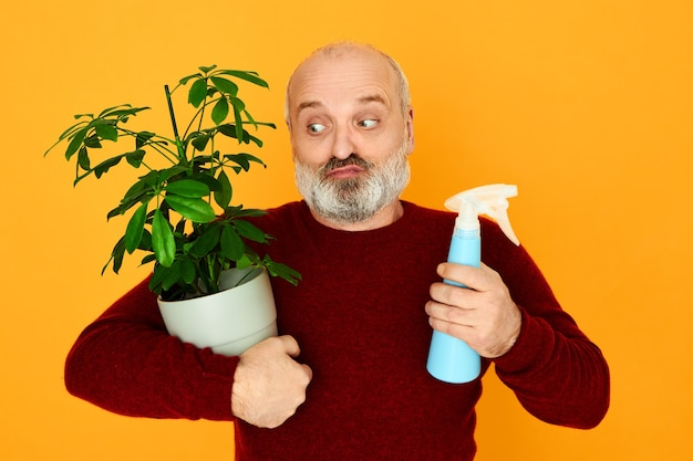 Portret van grappige verwarde kale ongeschoren mannelijke gepensioneerde met watersproeier en pot met groene plant