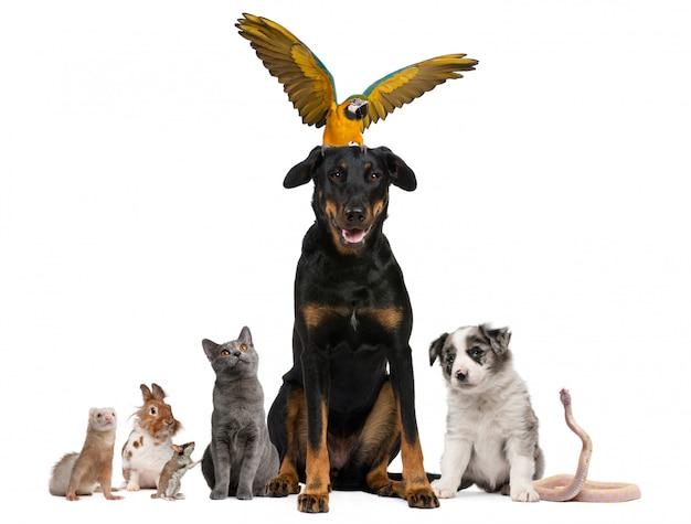 Portret van groep huisdieren voor witte achtergrond