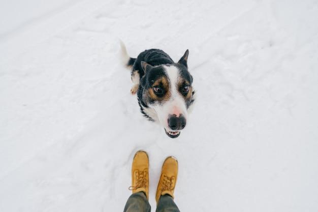 Portret van hierboven van de vriendelijke menselijke vriend van `s - gelovige hond die omhoog winnaar met grappige het glimlachen snuit bekijken. leuk mooi puppy dat tong toont en op voedsel wacht. gelukkig huisdier in de winter die zich op sneeuw bevindt.