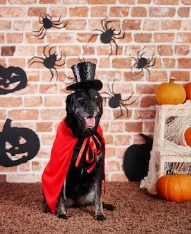 Portret van hond in halloween-kostuum
