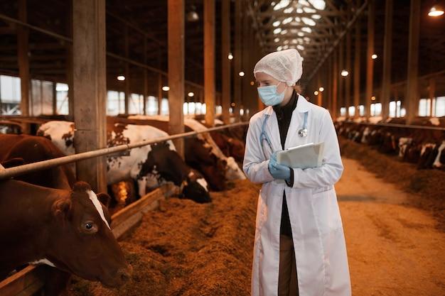 Portret van jonge vrouwelijke dierenarts die masker en laboratoriumjas draagt die koeien bij melkveehouderij onderzoeken, exemplaarruimte