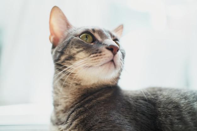 Portret van jonge vrouwelijke kat die naar boven kijkt
