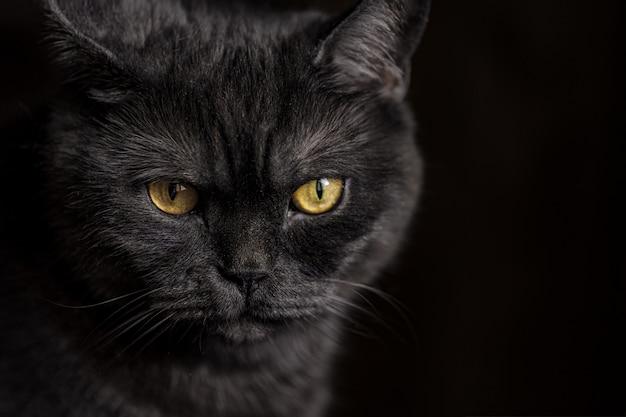 Portret van kat met grote gele ogen