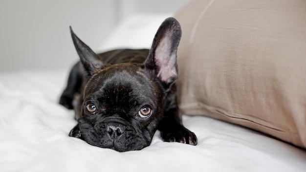 Portret van kleine hond die camera bekijkt