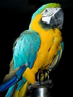 Portret van kleurrijke papegaai zittend op de kooi