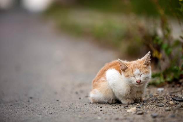 Portret van leuk aanbiddelijk katje van de gember kleine witte jonge kat met gesloten ogen zitten die in openlucht dromend op kleine kiezelstenen die op de vage lichte kleurrijke zonnige ruimteachtergrond van het de zomerexemplaar stellen.