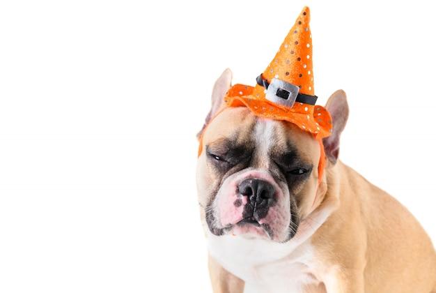 Portret van leuke franse buldog met hoed halloween