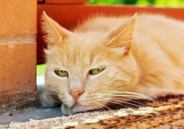 Portret van luie kat die zich buiten bevindt close-up