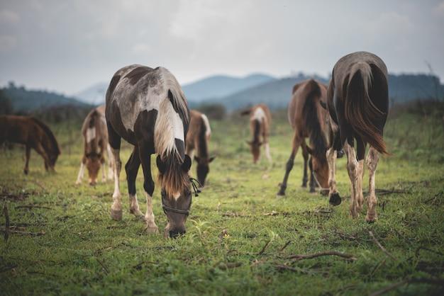 Portret van paard bij het gazon en de berg blauwe hemel