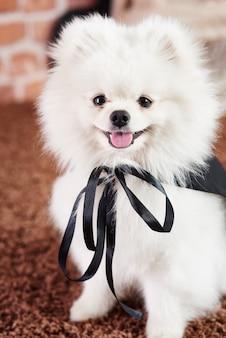 Portret van puppy in superheldenkostuum