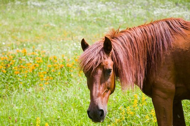 Portret van rood paard in de vallei, svaneti