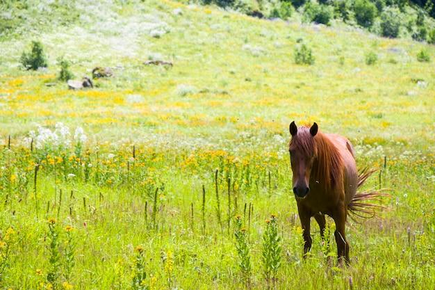 Portret van rood paard in de vallei