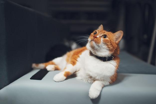 Portret van rood-witte kat die op bankhuis liggen.