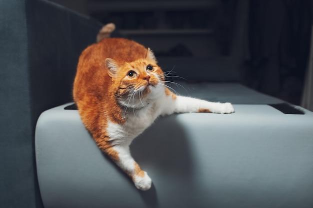 Portret van rood-witte kat die op bankhuis spelen.