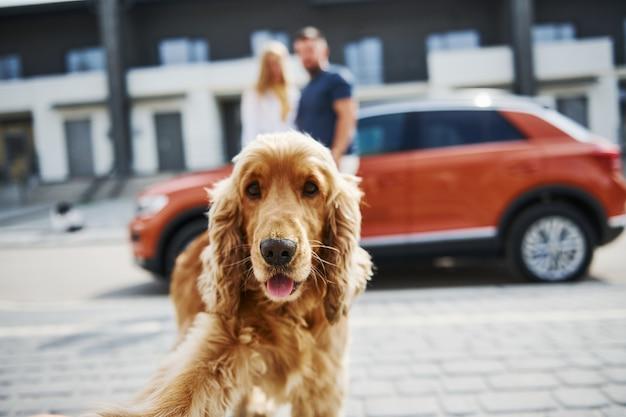 Portret van schattig huisdier. mooie paar hebben een wandeling samen met hond buiten in de buurt van de auto.