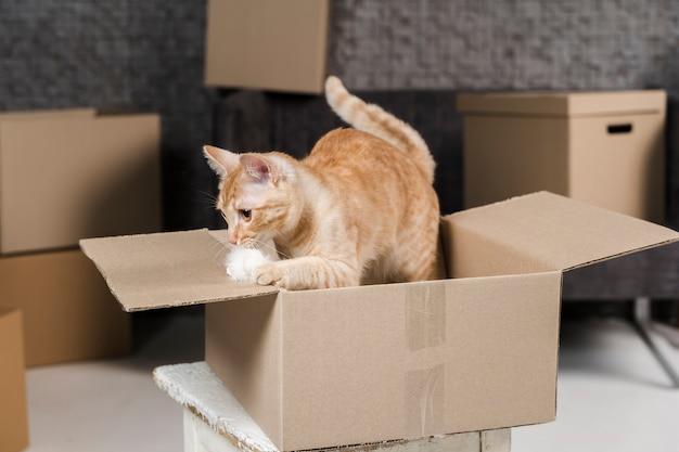 Portret van schattige kat binnenkant van kartonnen doos