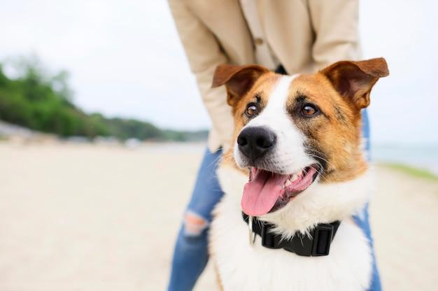 Portret van schattige kleine hond genieten van de natuur