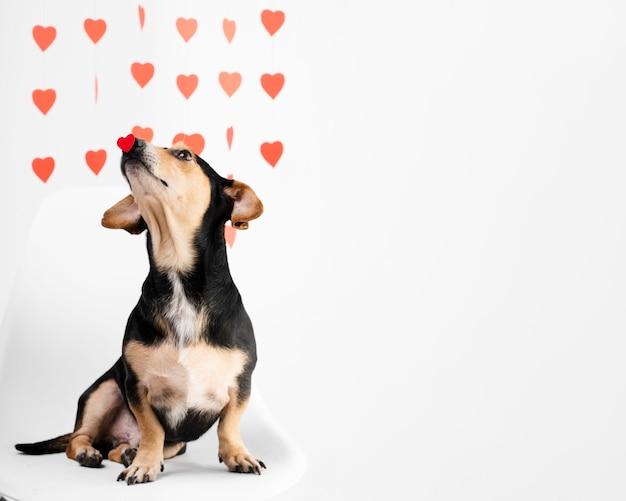 Portret van schattige kleine hond met kopie ruimte