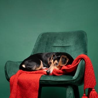 Portret van schattige kleine hond zittend op een stoel