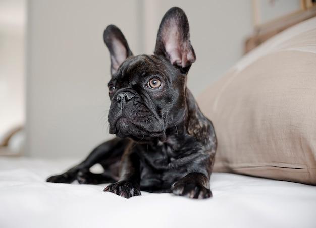Portret van schattige kleine hondje
