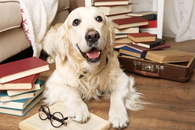 Portret van schattige labrador met stapel boeken in de kamer