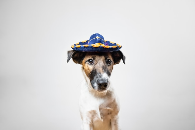 Portret van schattige puppy in mexicaanse traditionele hoed die zich voordeed op wit gladde fox terrier-hond gekleed in hoedenhoedzitting in geïsoleerd