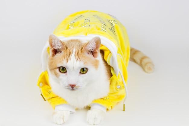 Portret van schattige witte en rode kat in een gele jas op een witte achtergrond