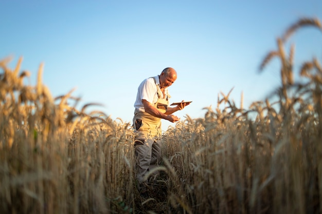 Portret van senior boer agronoom in tarwegebied gewassen vóór oogst controleren en tabletcomputer te houden