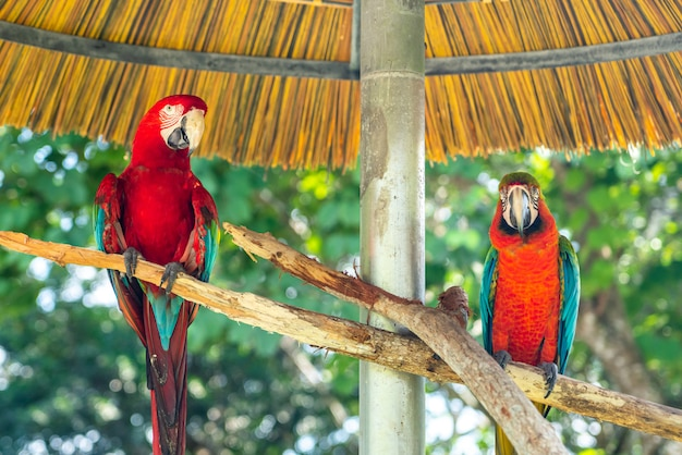 Portret van twee kleurrijke papegaaien in een park