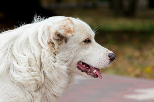 Portret van witte grote hond close-up in profile_
