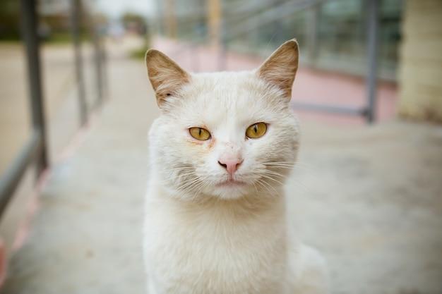 Portret van witte kat die camera bekijkt