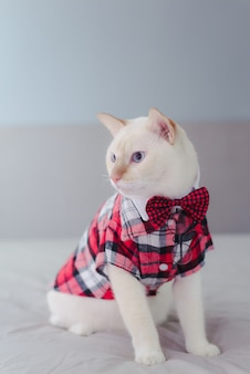 Portret van witte kat die een vlinderdas draagt
