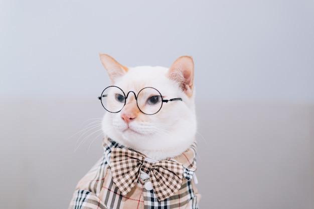 Portret van witte kat dragen van een bril