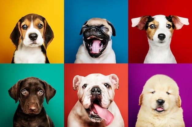 Portretcollectie van schattige puppy's