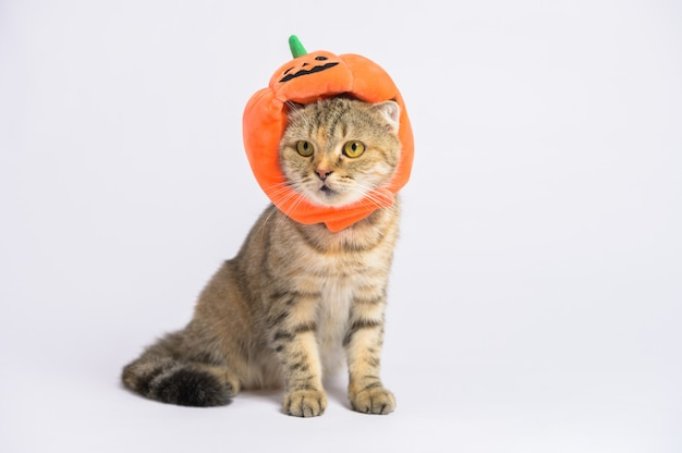 Portretfoto van leuke bruine gestreepte katkat die halloween-conceptenhoed dragen.